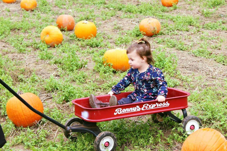 Pumpkin Picking & Fall Fashion Favorites